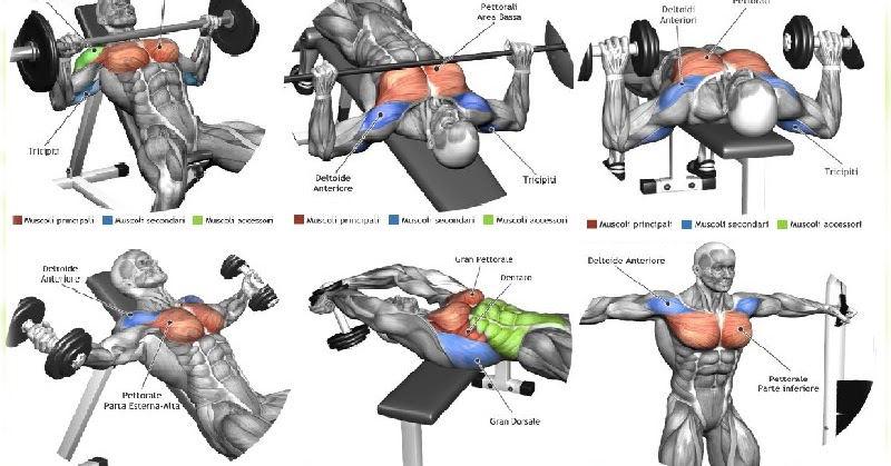 Best Chest Muscle Exercises